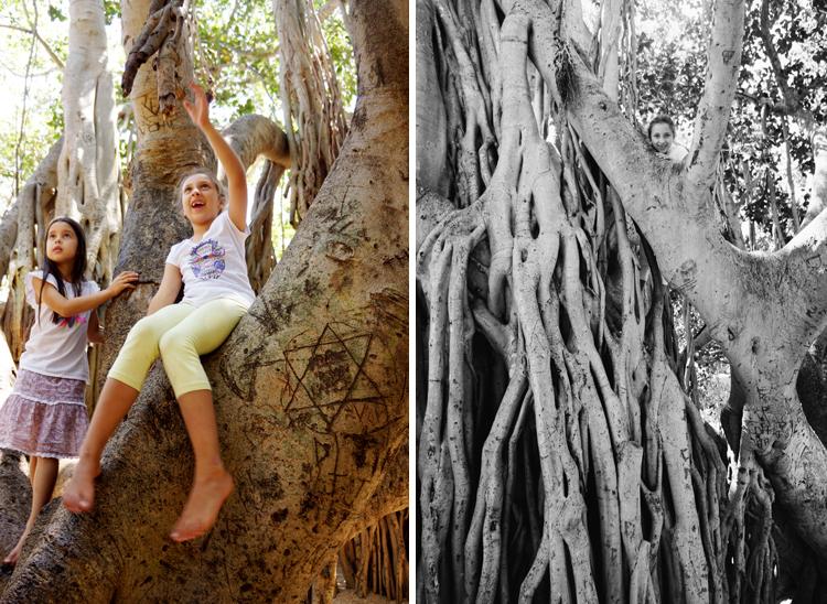 TreeClimbing3-SOOG.jpg