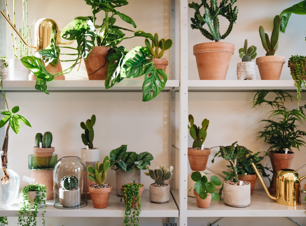 plant consultancy - Are you in doubt about which plants would fit your space? Maybe you need help buying them and getting fitting pots, or perhaps you're in desperate need of some plant care advice?In any case, I'll help you out with the plant related questions and needs you might have.Let me know how I can help you.I can also guide you with the placement and growth of your plants, including soil mixtures and watering.