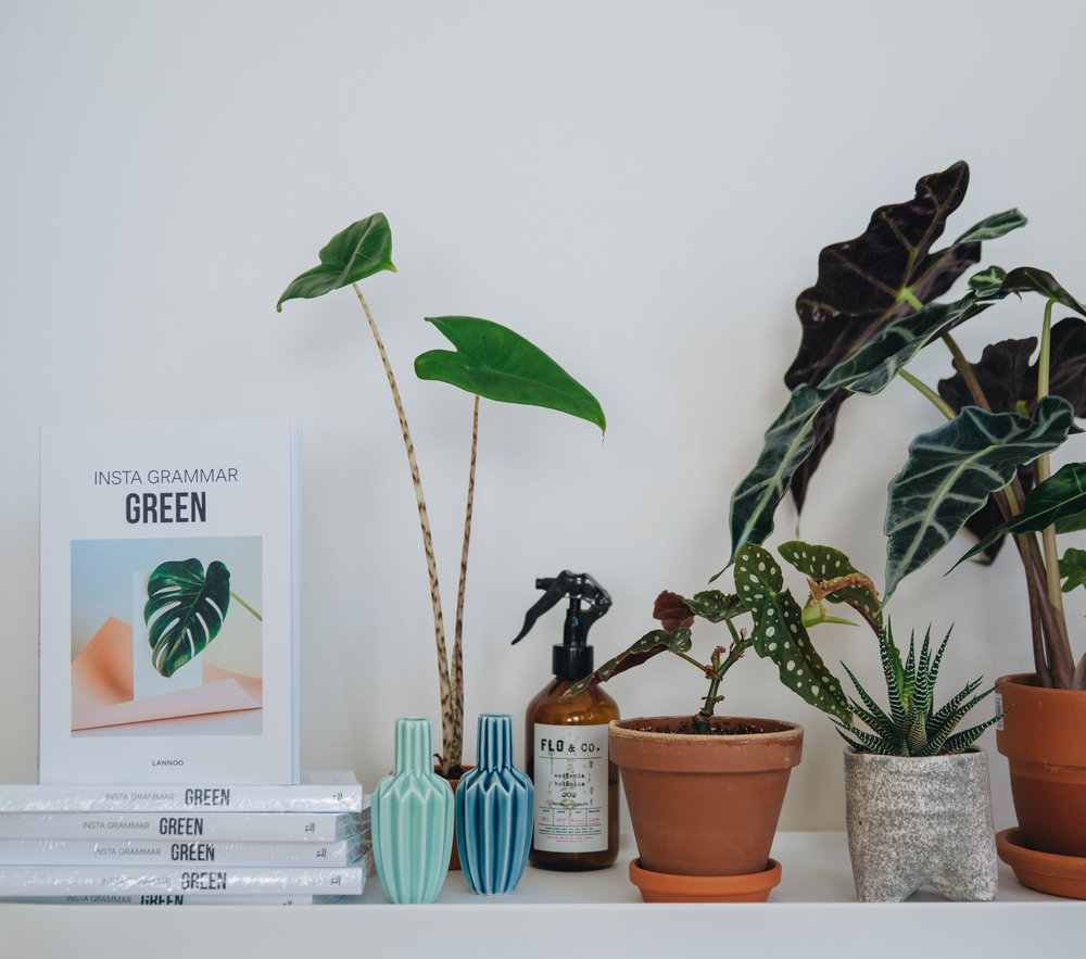 Four of my plant photos were featured in the book  Insta Grammar Green .