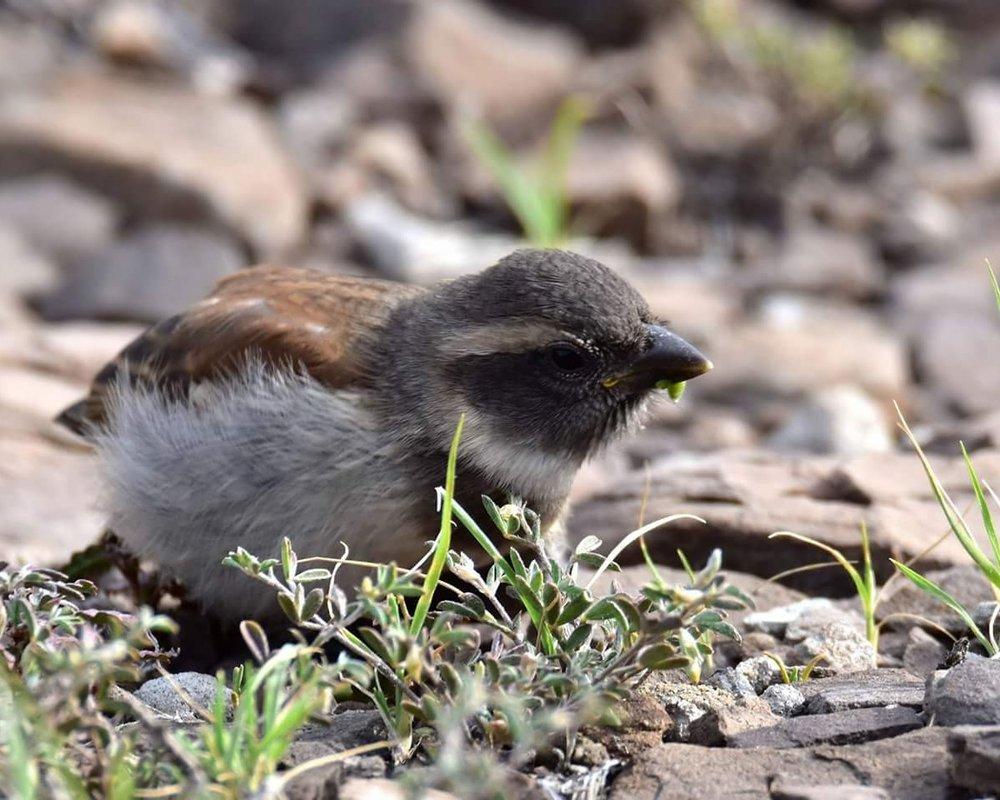 Munchkin, the bumbling baby bird