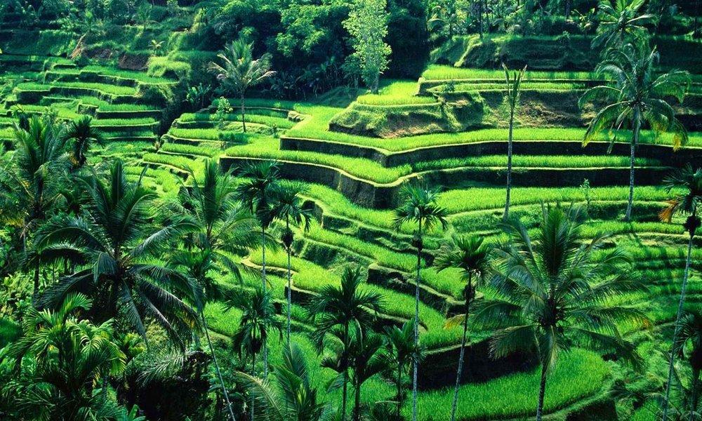 Tegalalang-Rice-Terrace.jpg