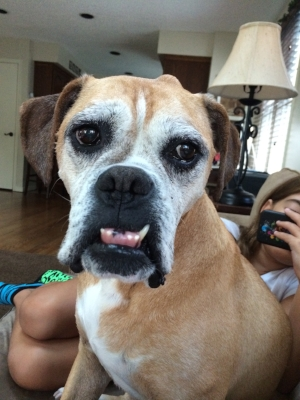 She wasn't the prettiest Boxer, but to us, she was perfect.