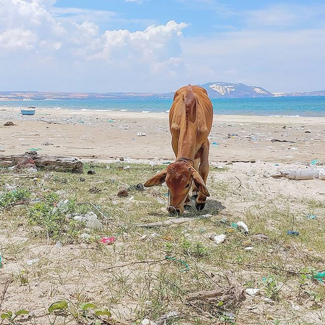 I know that we, as a species, have just started being serious about cleaning up our oceans. But, when seeing something like this, I cant help byt think that we can do something more. . . . . . . . . . . . . . . #visualizeleaving #savetheoceans #cleanourbeaches #backpackvietnam #backpacker #travelingpodcast #travelpodcast #planetearth #humanplanet #plastic #recycle