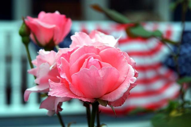 exterior_rose.jpg