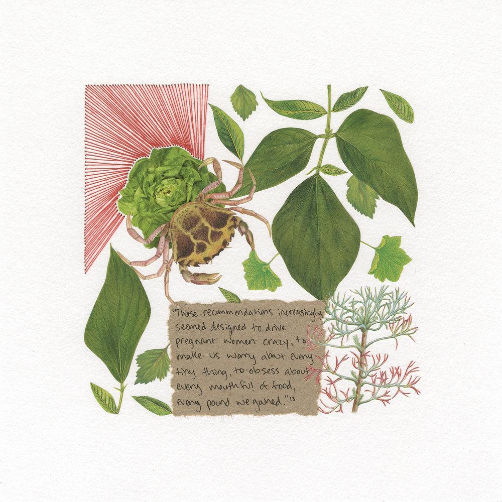week 26 (lettuce)