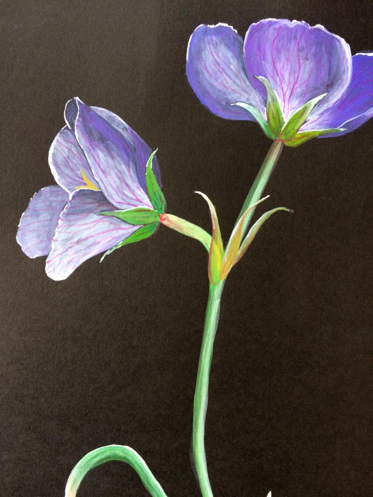 Flower 04 - Acrylic paint on black cartridge paper