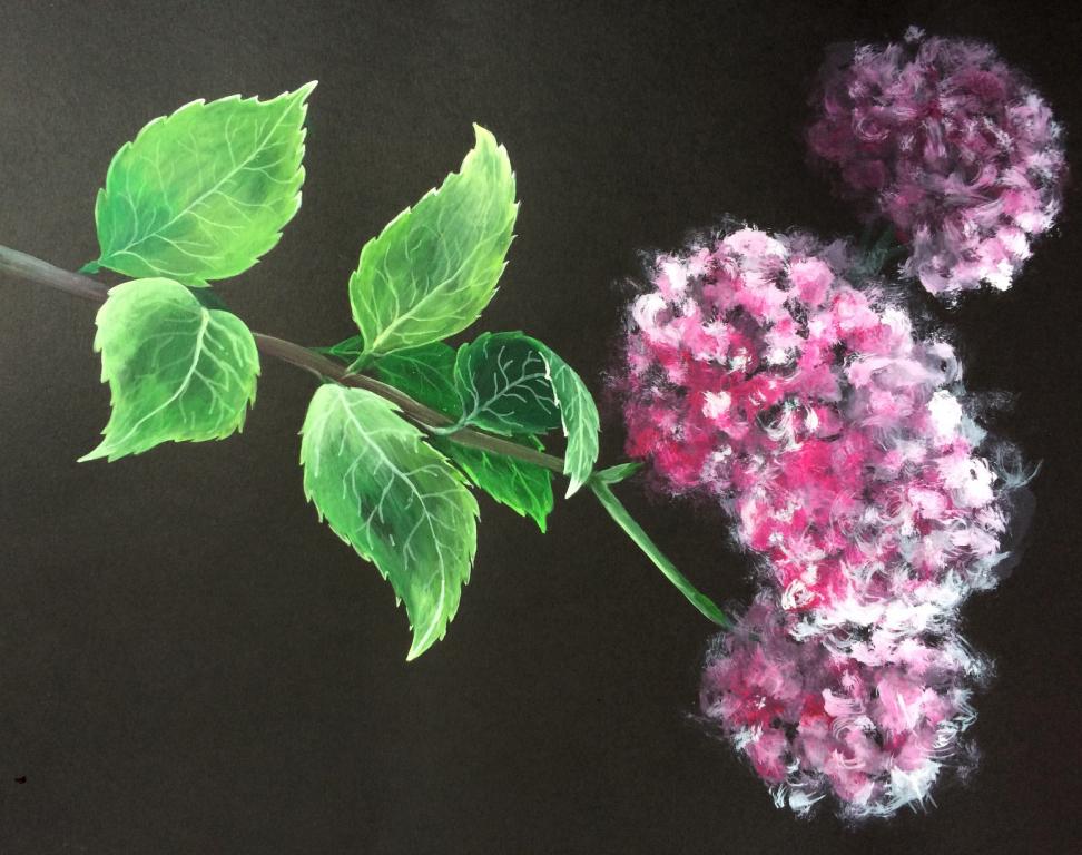 Hydrangea branch - Acrylic paint on black cartridge paper