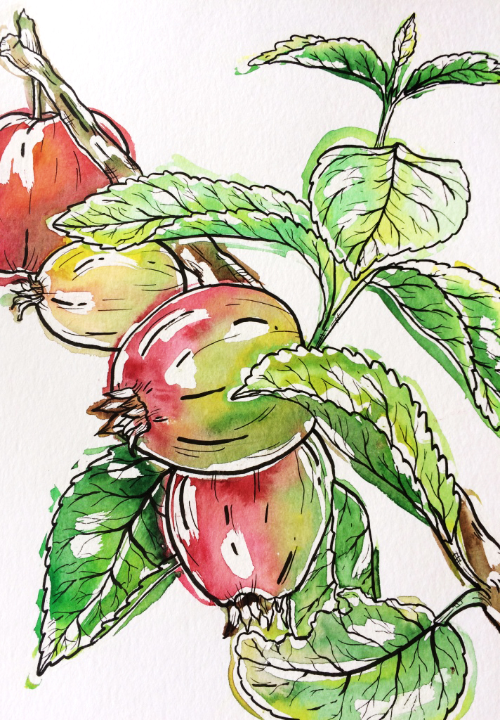 Branch from an apple tree  - Watercolor and marker