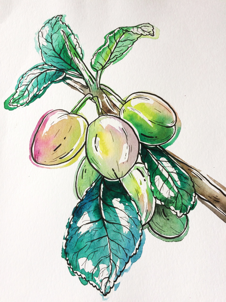 Branch from a plum tree  - Watercolor and marker