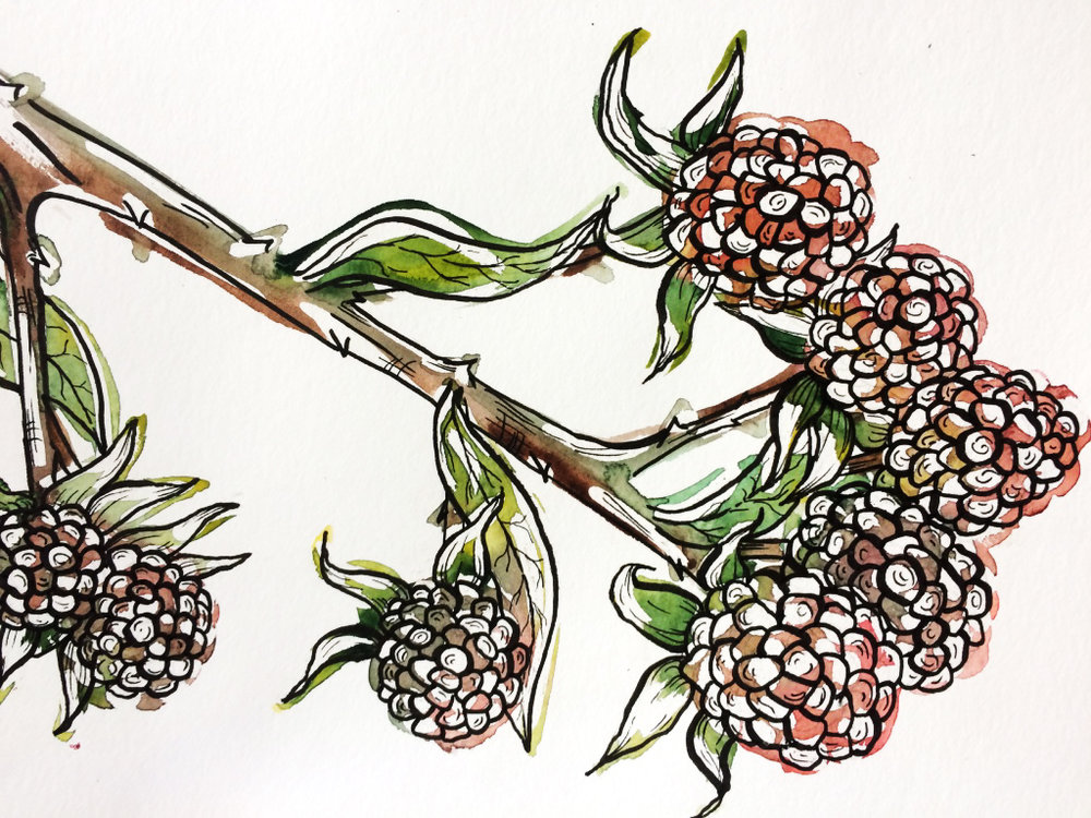 Branch from a bramble  - Watercolor and marker