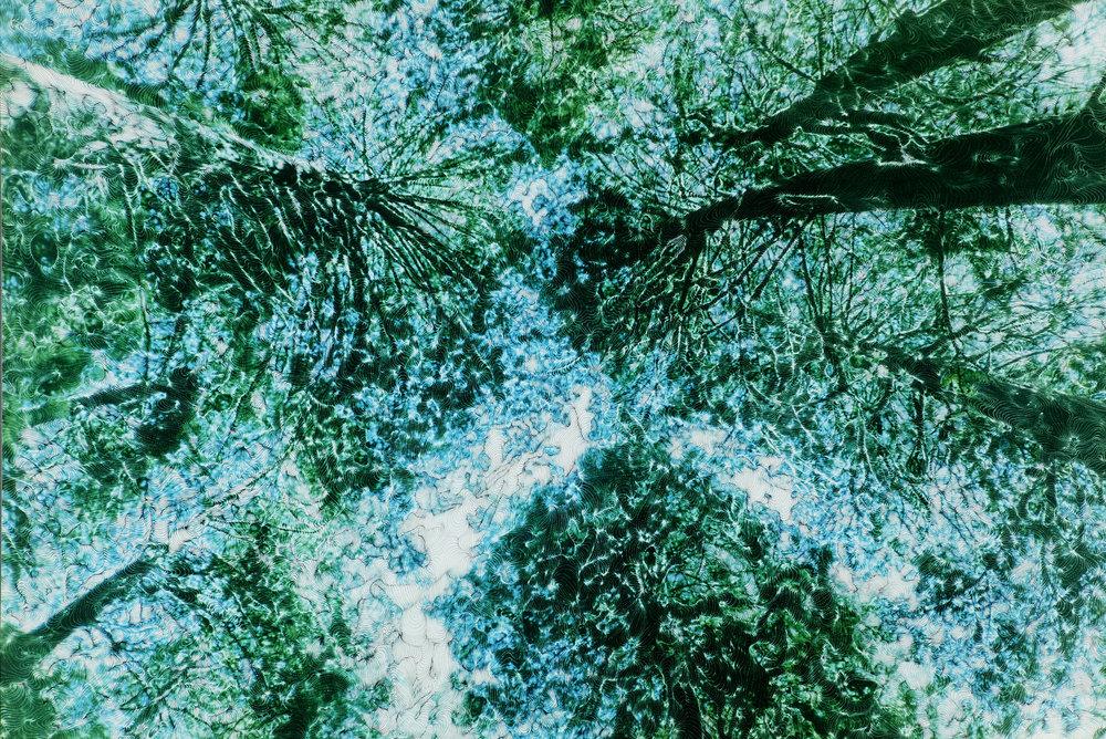 Bluewoods