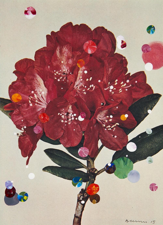 Rhododendron Hybridum Mars