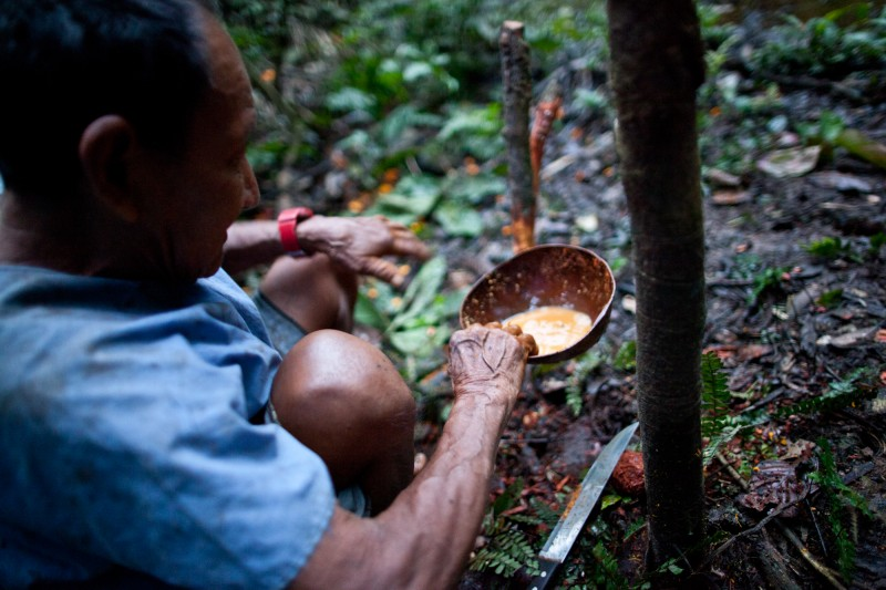 Delfin bereitet den Yoco-Trank zu, indem er die innere Rinde von der hölzernen Liane kratzt. Photo: Alex Goff