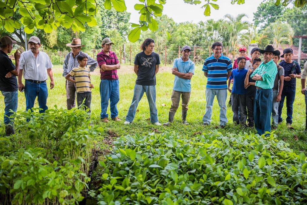 Creemos en una gobernanza local fuerte - Nuevas Raíces ayudó a establecer y registrar legalmente seis asociaciones comunitarias para la gobernanza de decisiones en el manejo de la tierra. Estas asociaciones se unen en participación a Nuevas Raíces para discutir sus metas en la siembra de árboles y el uso de los ingresos provenientes de los bosques o proyectos de ecoturismo para el desarrollo de sus comunidades y conservación de su entorno.