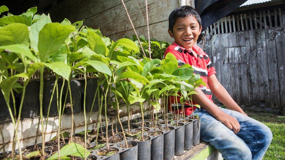 $1 = 1 Árbol - Nos asociamos con One Tree Planted para reforestar toda Guatemala