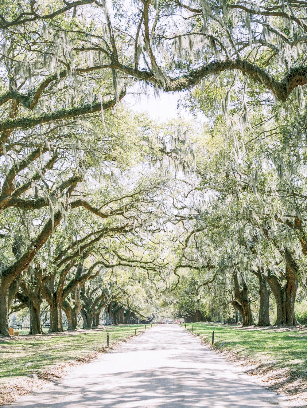 Lisa Silva Photography- Charleston and Jacksonville Fine Art Film Wedding Photography-12.jpg