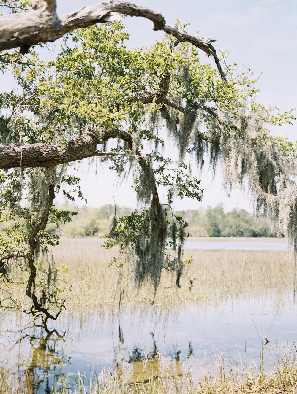 Lisa Silva Photography- Charleston and Jacksonville Fine Art Film Wedding Photography-18.jpg