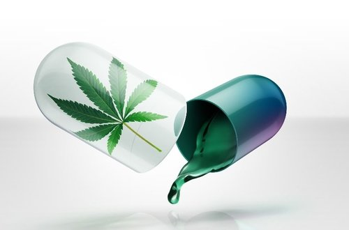 cannabis-hebrew-u-e1499767089801-753x497.jpg