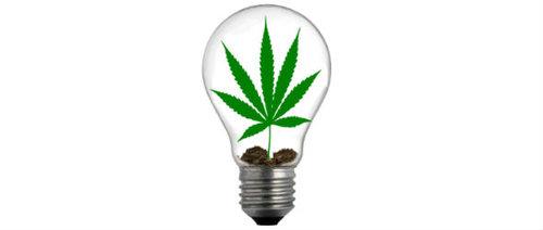 sproutlightbulb3.jpg