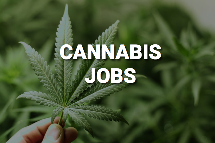 Cannabis-Jobs.png