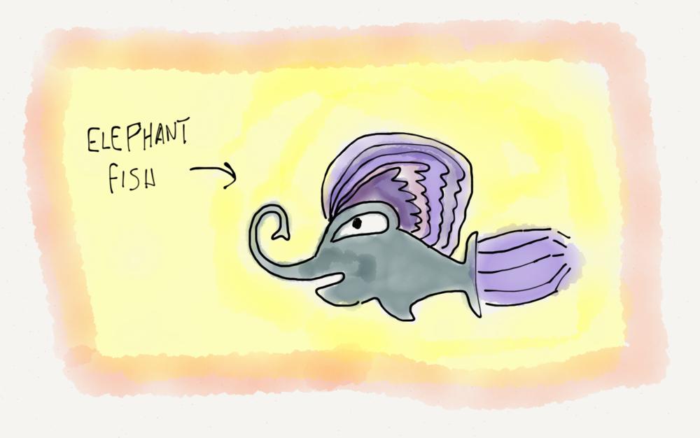 elefish.PNG