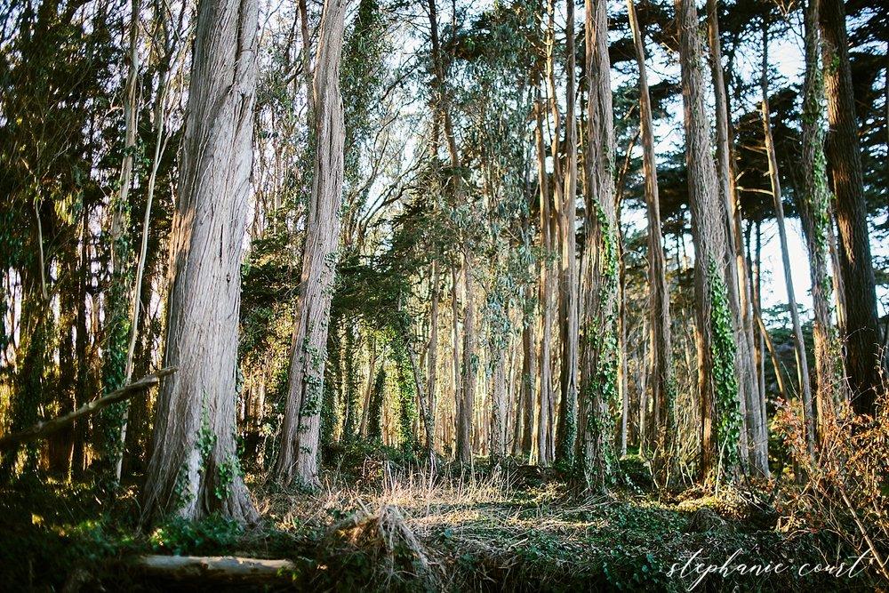 Hiking_(12-03-17)_015-3.jpg