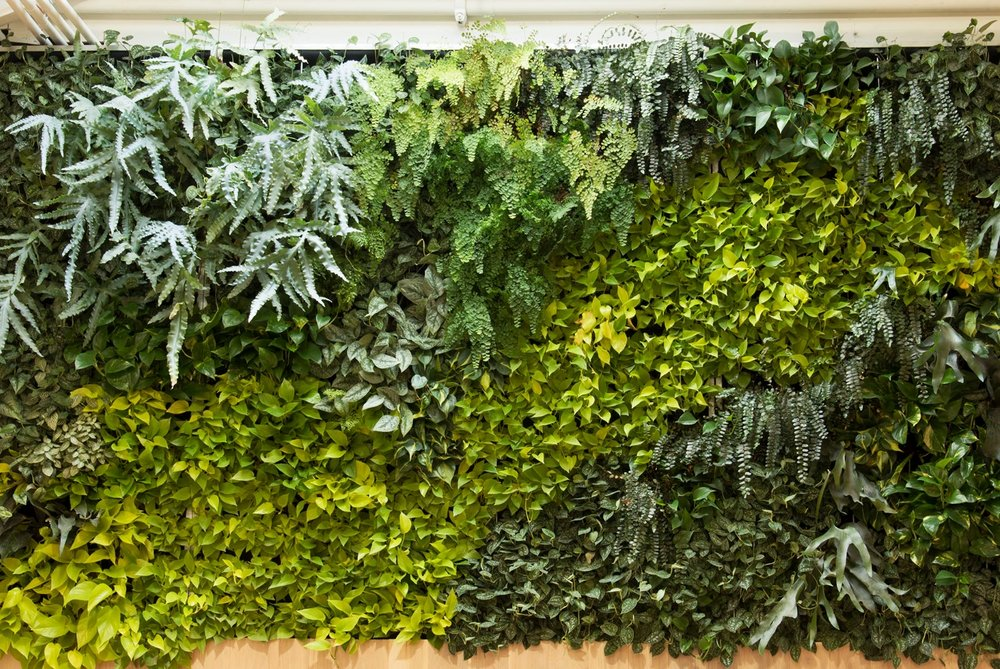 Close up of green wall