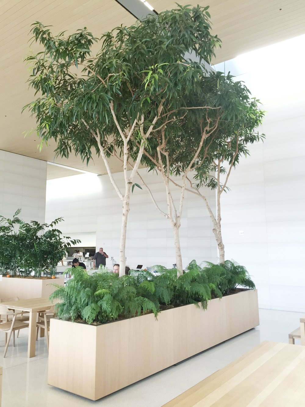 Brandon-Pruett-Ficus-tech-office.jpg