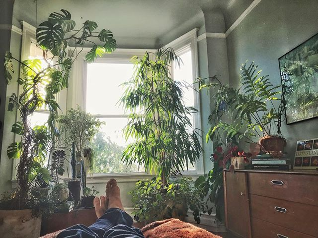 It's good to be back home in SF for a while! #gardendesign #interiordesign  #houseplants #houseplantclub #interiorplants #plantsofinstagram #plants #plantsmakepeoplehappy #sanfrancisco #monsteramonday #containergardening #greenhouse
