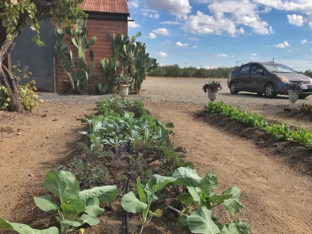 The winter garden is planted @zinchouse_farm #highway120 #california #farm #garden #vegetarian #kale #salad #succulents #cactus #plantsmakepeoplehappy @sunsetmag