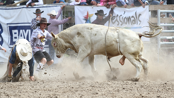 A rodeo in Hawke's Bay where the fruits of labour swing like a mighty bag of onions