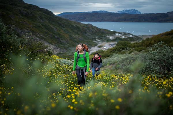 Hiking up through yellow flowers in Narsarsuaq.jpg