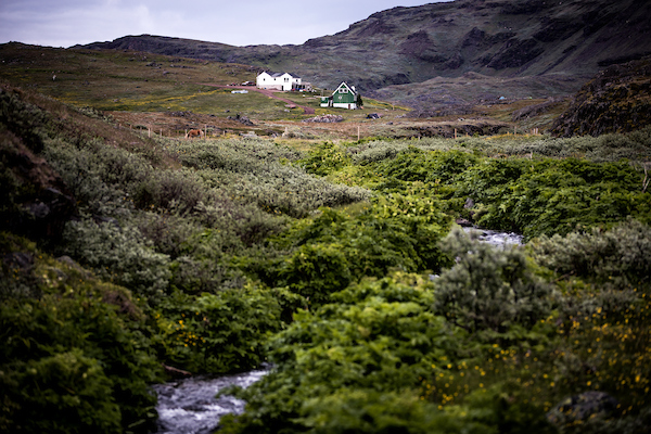 A lush stream near Tasiusaq sheep farm in South Greenland.jpg