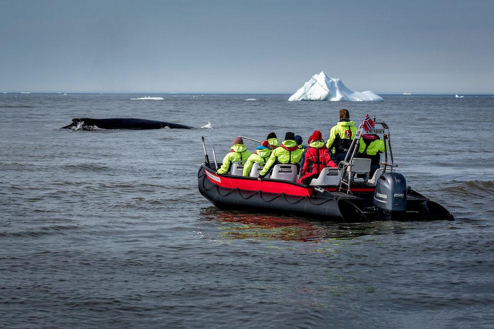 Whale safari with MS Fram guests near Qeqertarsuaq in Greenland.jpg