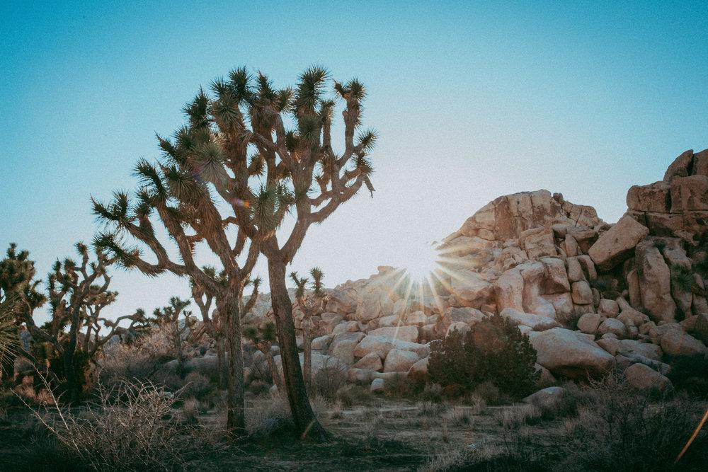 A First-timer in the High Desert -