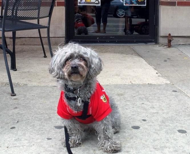 Flo & Santos - $$, South Loop, Pizza, Sidewalk Seating, Patio Seating, Dog Friendly