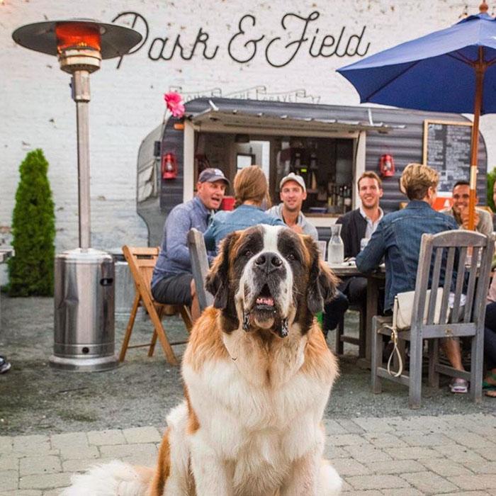 Park & Field - $$, Logan Square, Bar Food, Patio Seating, Dog Friendly