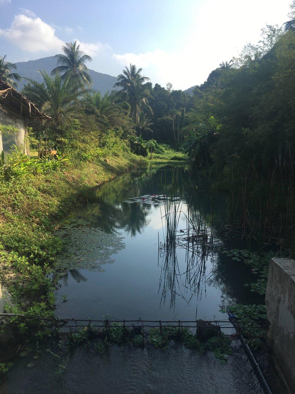 Wonderland Healing Center, Koh Phan-Gan, Thailand -