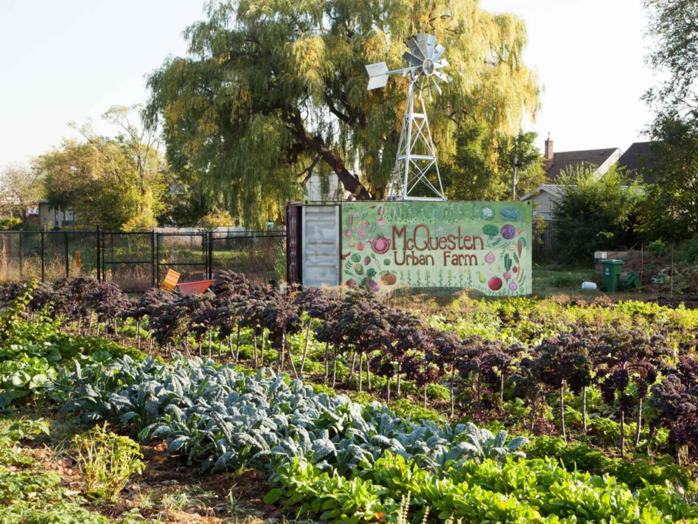 McQuesten Urban Farm during growing season