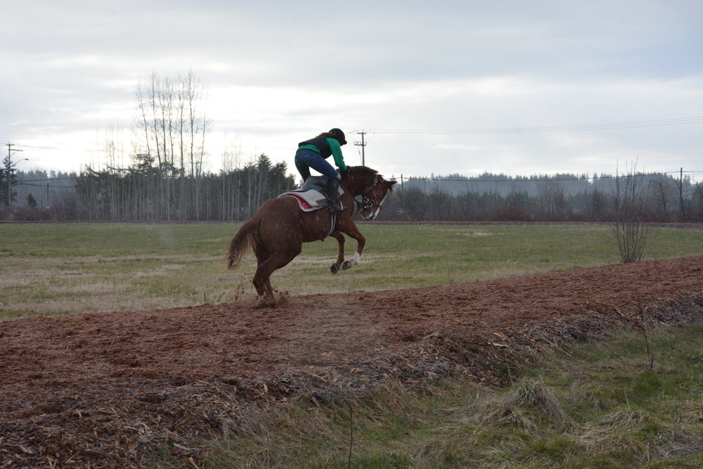 My favourite horse to gallop, Roger, is a bit of a brat and likes to throw bucks when he is excited!