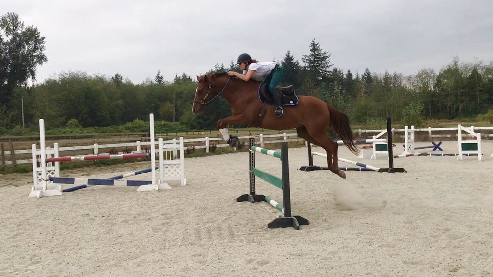 """Milo schooling 3'6"""" for the first time ever... in a halter."""