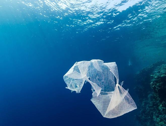 single-use-plastic-bags.jpg