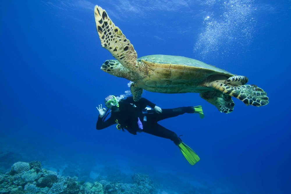 World class scuba diving off the island of Roatan at your leisure. -