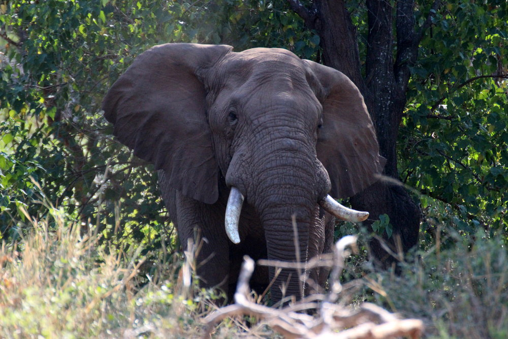 - An expedition amongst the big 5 Animals