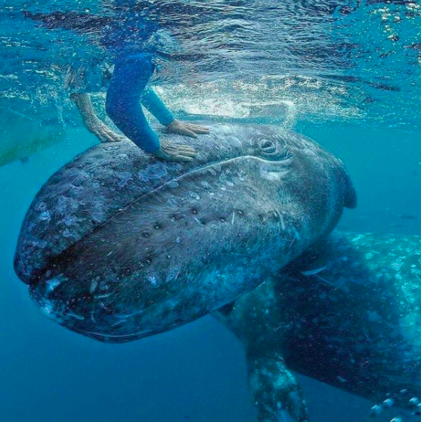 In Guerrero Negro, a legendary encounter with grey whales.