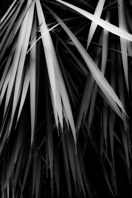 Palmtreesweb.jpg