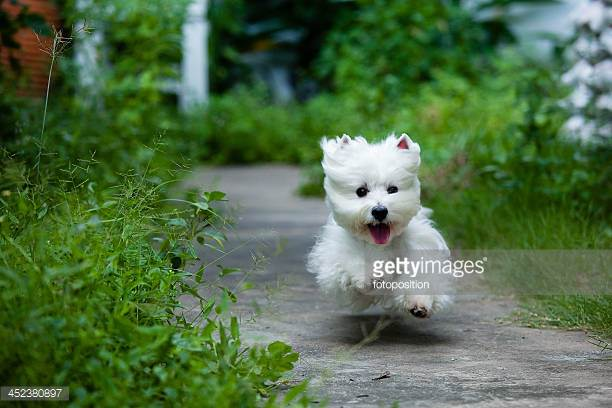 Photo by fotoposition/iStock / Getty Images