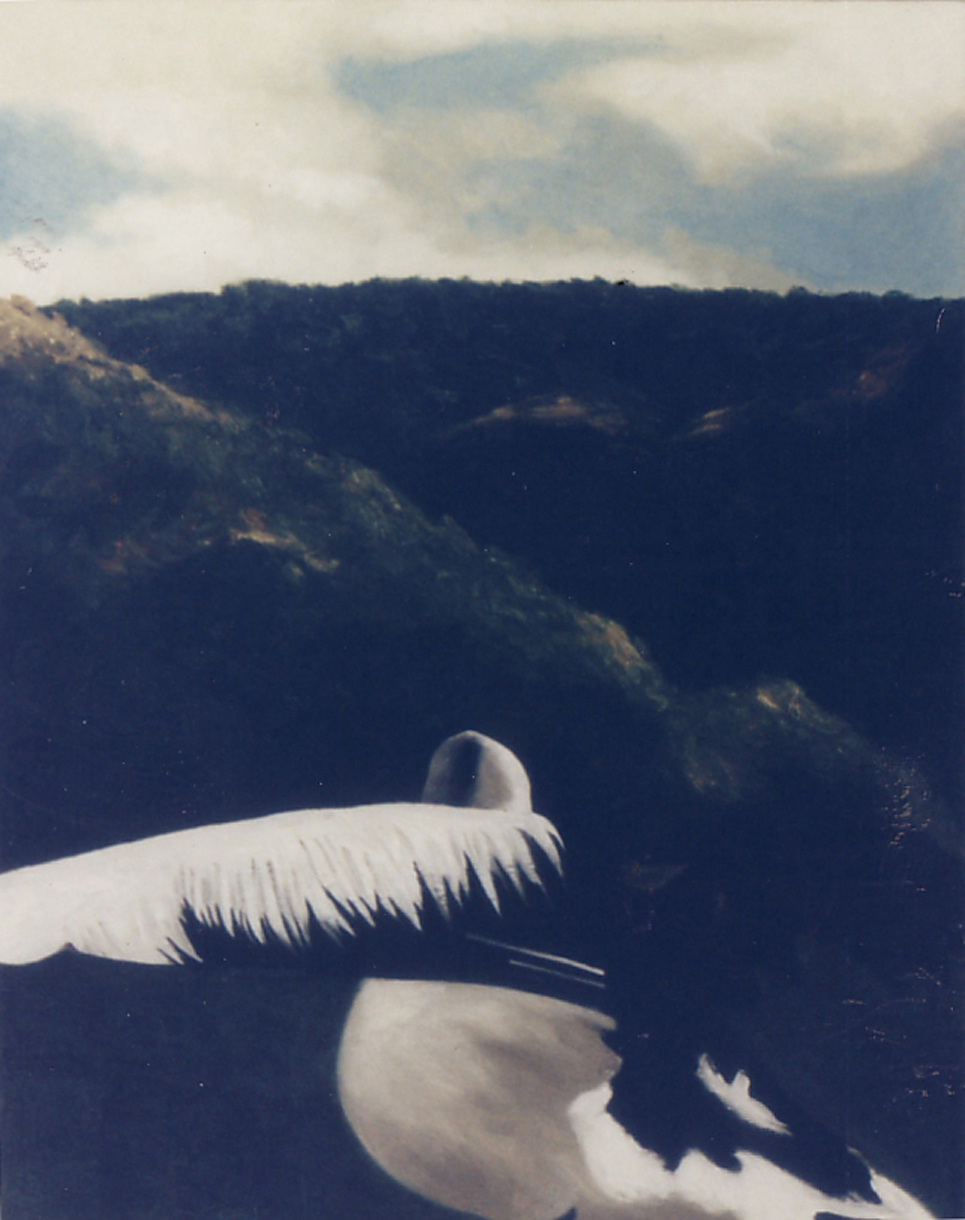 Pelican dreaming-   1992 oil on canvas