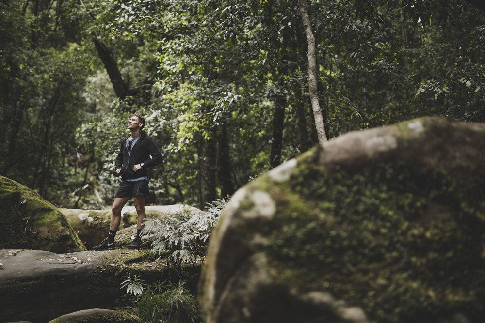 nath_forest3.jpg