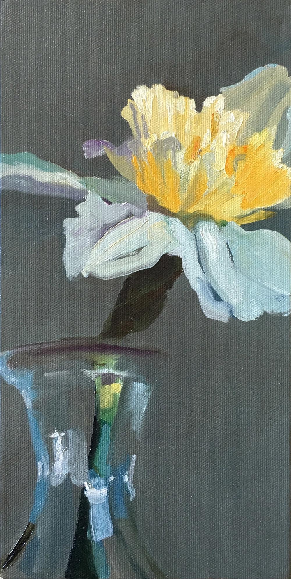 Daffodil Study 1